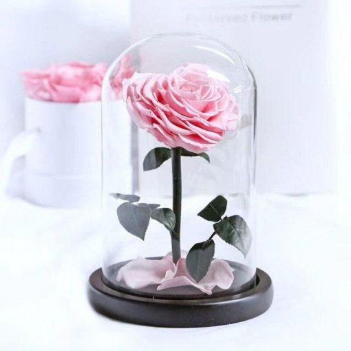 Rose Éternelle Paris